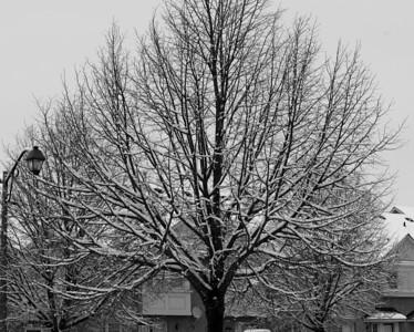 First Snow November 19 - 16