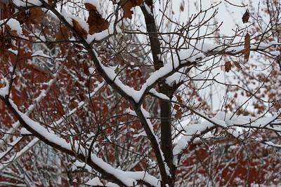 First Snow November 19 - 08