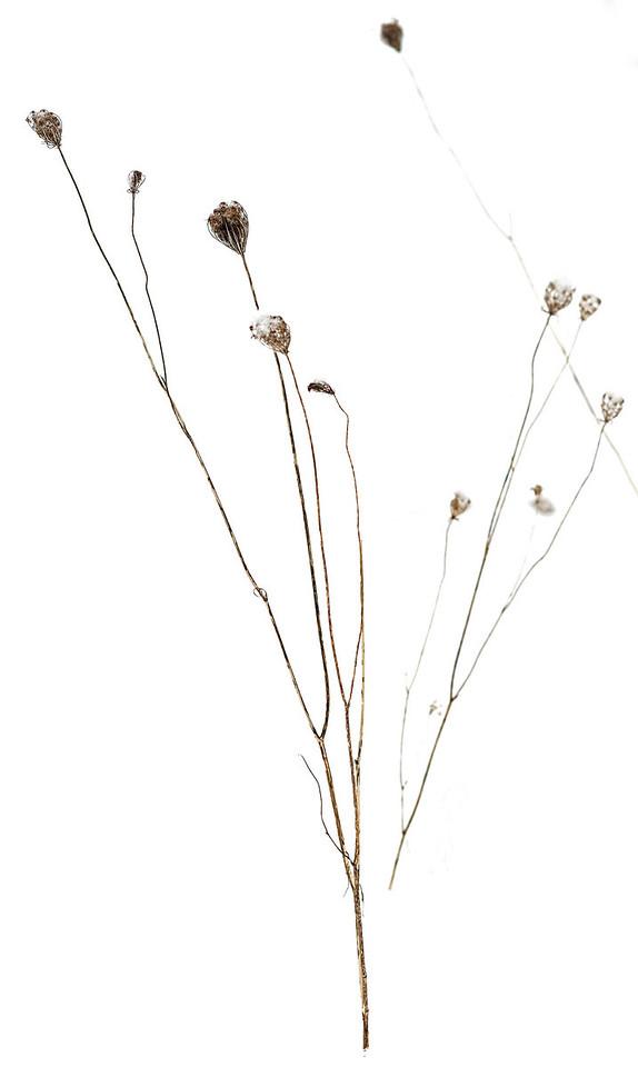 2011-02-26 - Pomona (2) - 20