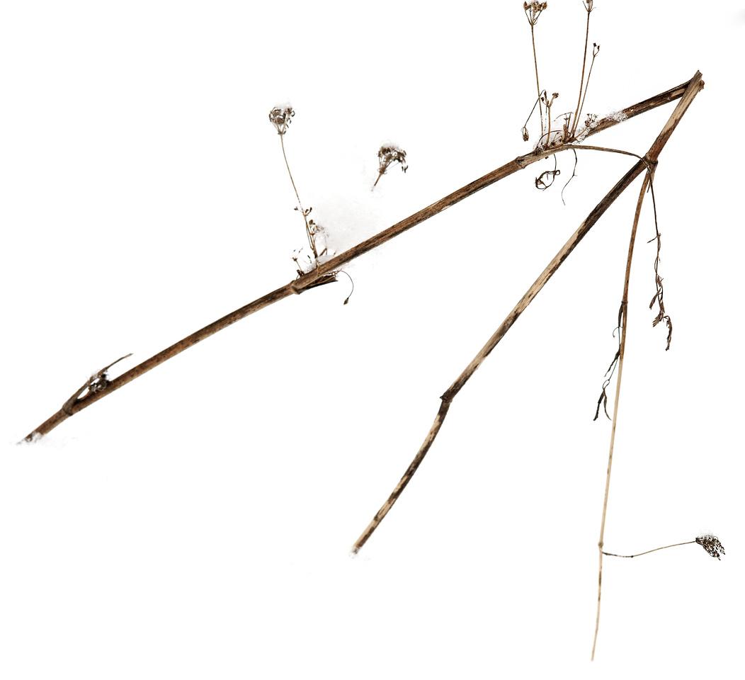 2011-02-26 - Pomona (2) - 03