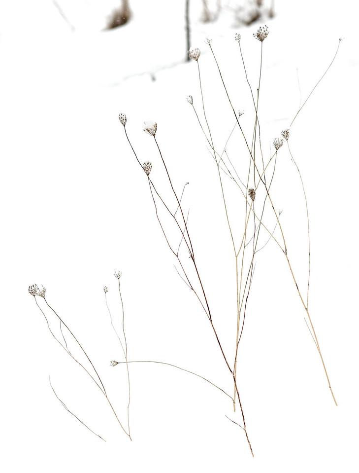 2011-02-26 - Pomona (2) - 24