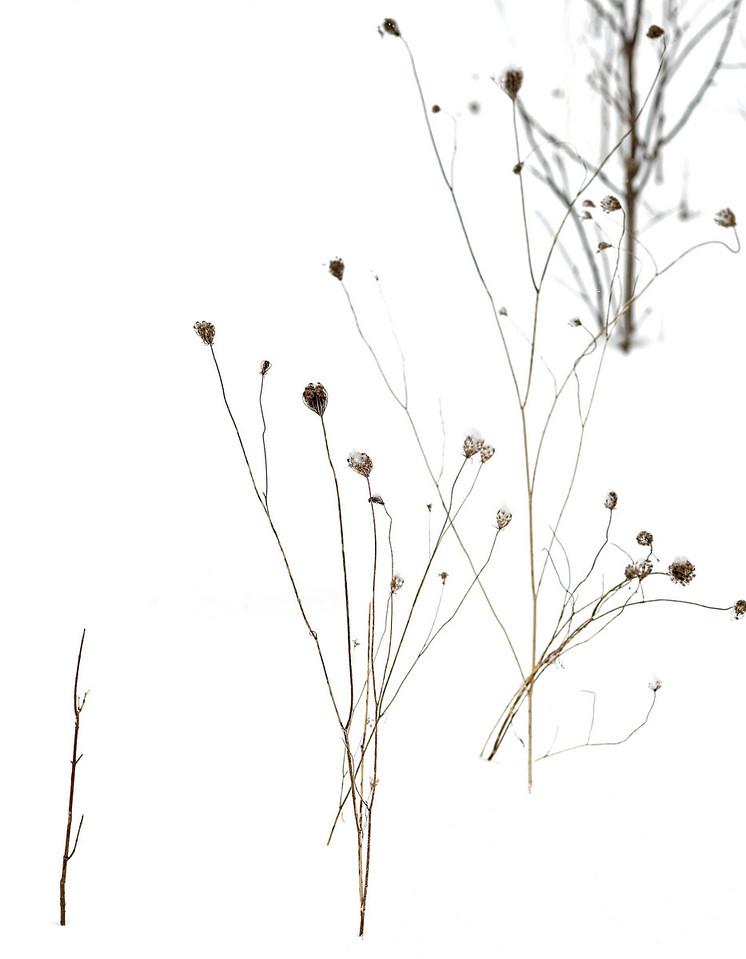 2011-02-26 - Pomona (2) - 19