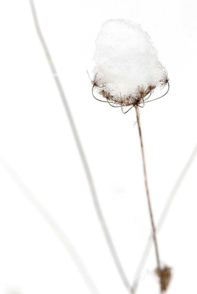 2011-02-26 - Pomona (2) - 15