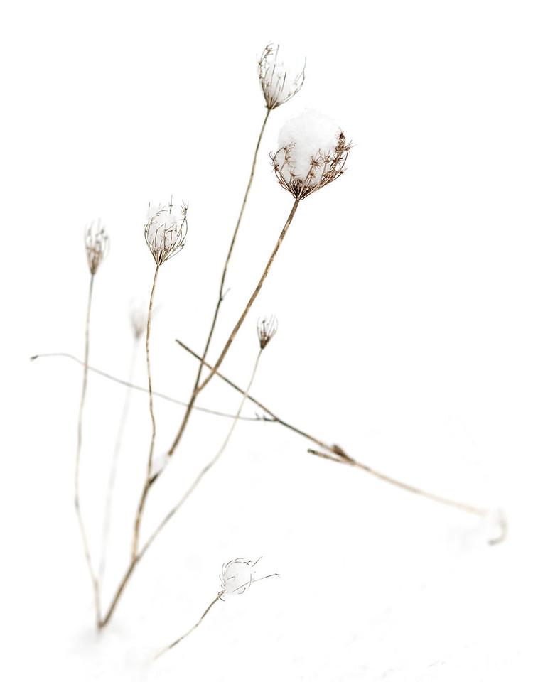 2011-02-26 - Pomona (2) - 08