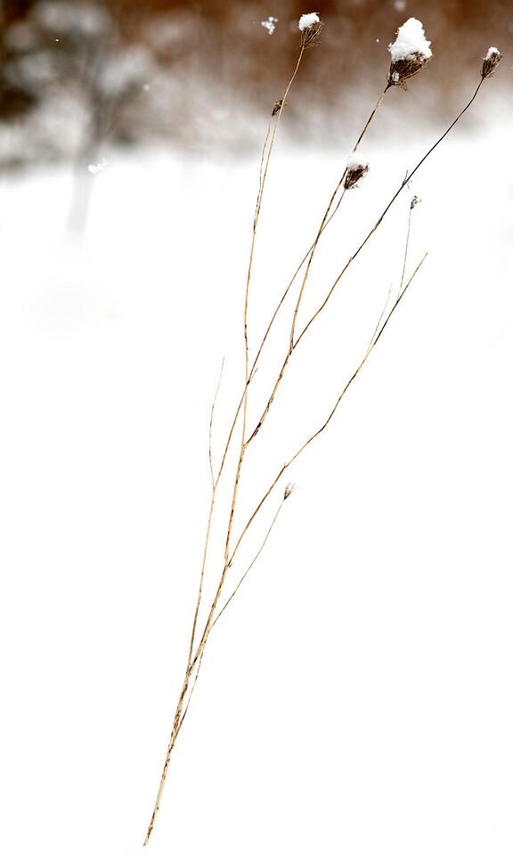 2011-02-26 - Pomona (2) - 06