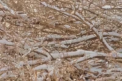 2011-02-26 - Pomona (1) - 13