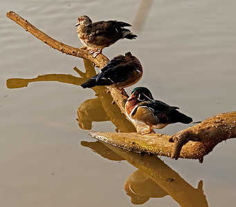 Bird sanctuary in Pretoria