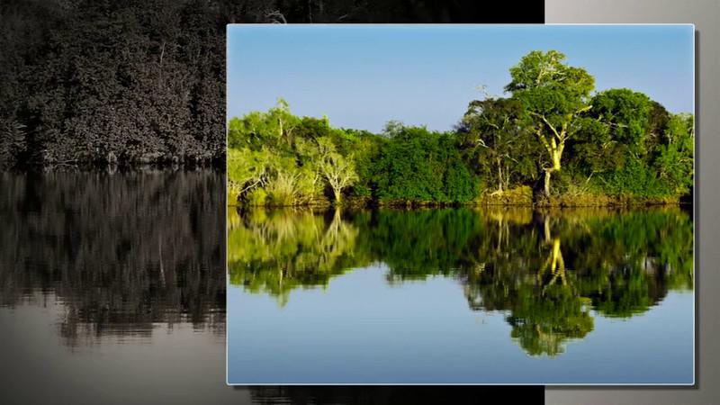 African Safari - July 2012