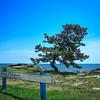 Woodmont Tree