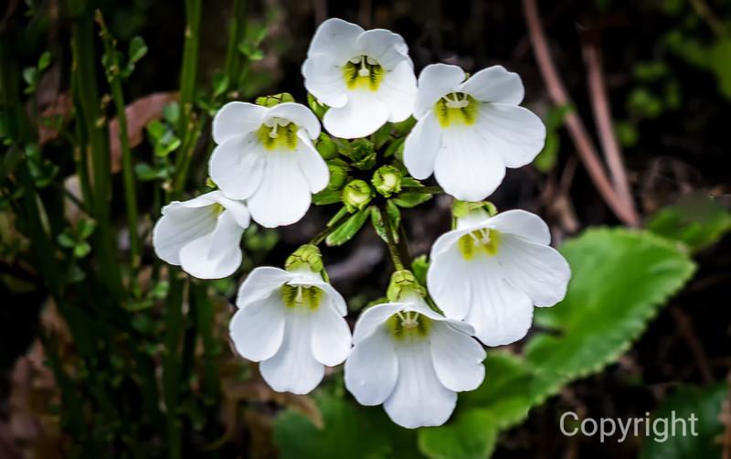 Alpine Bouquet