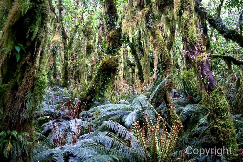 Rainforest World