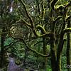Wild Rainforest