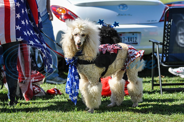 A poodle is dressed in patriotic attire while attending the 19th annual Red, White and Blue Festival in downtown Bullard on Saturday, November 3. The festival recognizes and honors the sacrifices and service of veterans and active duty. (Jessica T. Payne/Tyler Morning Telegraph)
