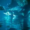 1965-09 Sea Life Park aquarium