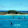 1966 - Sea Life Park Dolphins