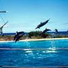 1965-09 - Sea Life Park Dolphins