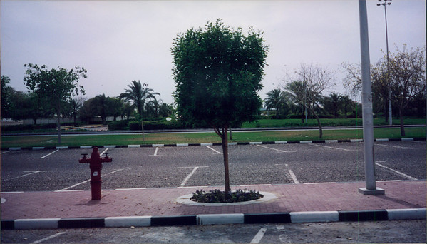 2002-04 Kuwait City Trees