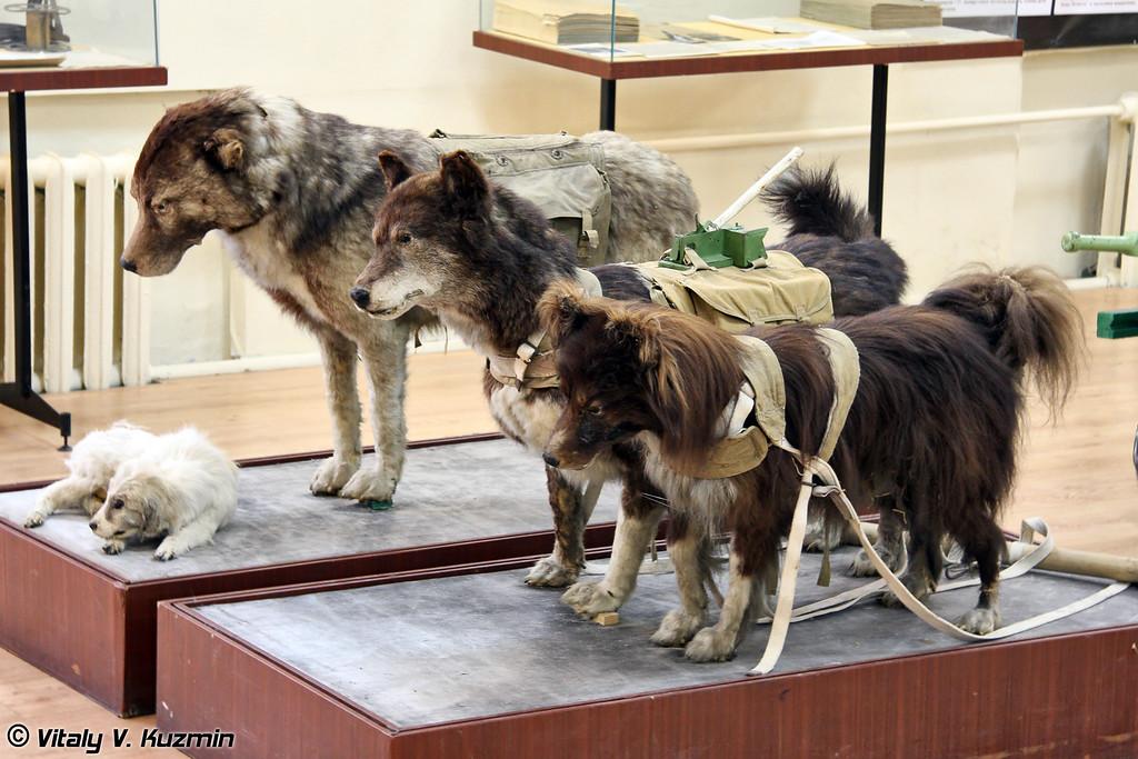 Примеры использования собак (The examples of military dog breed)
