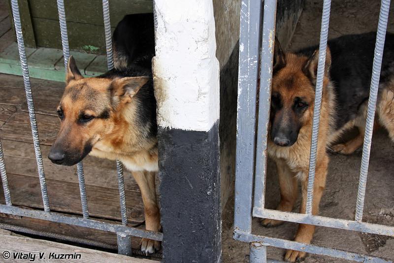 470 Методико-кинологический центр служебного собаководства ВС РФ (470th Methodology-cynology center of military dog breeding)