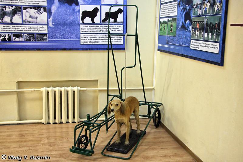 Тренажер для подготовки собак-поводырей (Seeing Eye dog training)