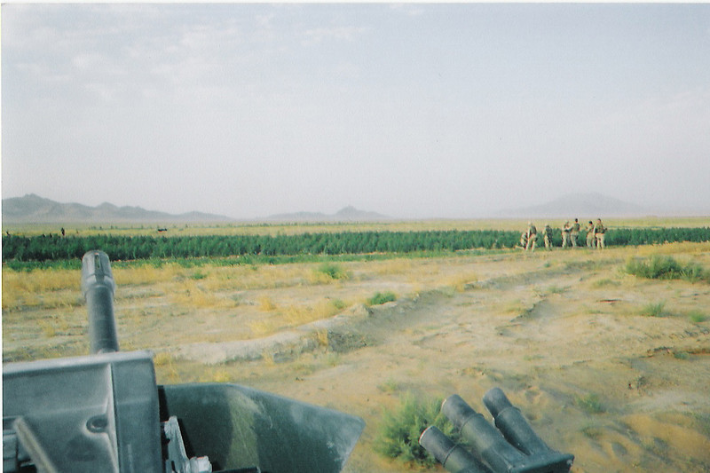 2003 - Marijuana crop in southern Afghanistan