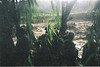 2003 - Flash-flood in the mountains near the Pakistani border of Afghanistan. It was raining upstream, not in this location.