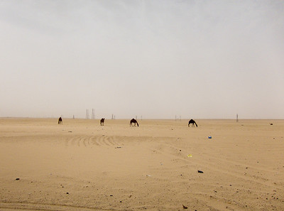 My first wild camel spotting. I have no idea what they are picking at out there. As far as I can tell there's only sand and trash. Come to think of it I don't know how these things survive at all. There is nothing out in the middle of the desert. NOTHING.