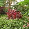 Greenhouse Flora