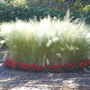 Grasses at Bellingrath