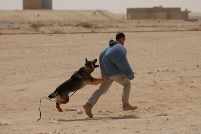 USAF Security Forces K-9