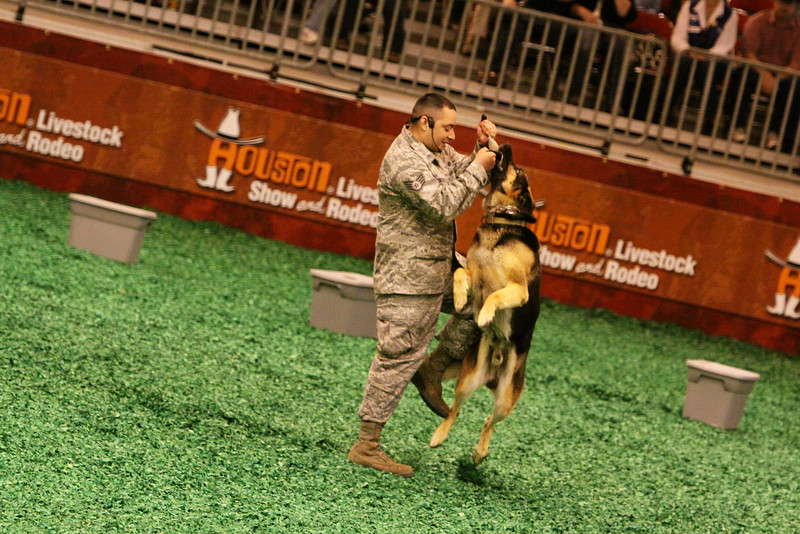 2012 Houston Livestock Show and Rodeo Armed Forces Appreciation Day Military Dogs training show.