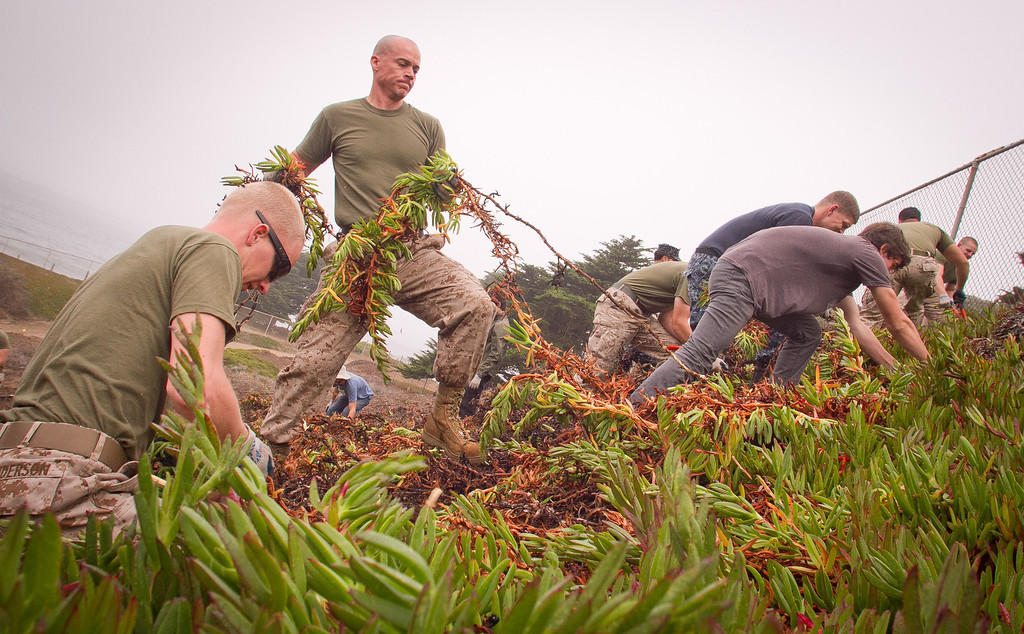 Marines Justin Anderson (sun glasses) and John Anderson perform habitat restoration by removing ice plant at Baker Beach in San Francisco, Calif., on Saturday, October 8, 2011.
