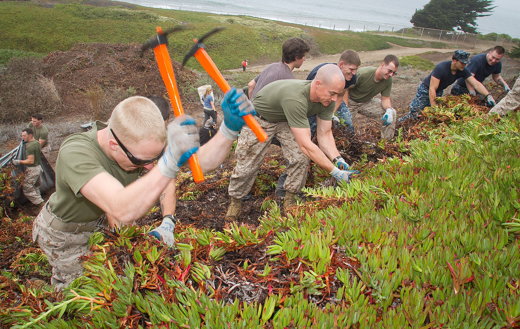 Marines Justin Anderson (sun glasses) uses two picks to perform habitat restoration by removing Ice plant at Baker Beach in San Francisco, Calif., on Saturday, October 8, 2011.