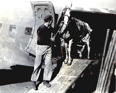 horseoffloading