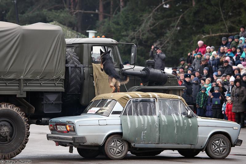 Показательное выступление кинологов ОДОН (Demonstration of ODON K-9 unit)