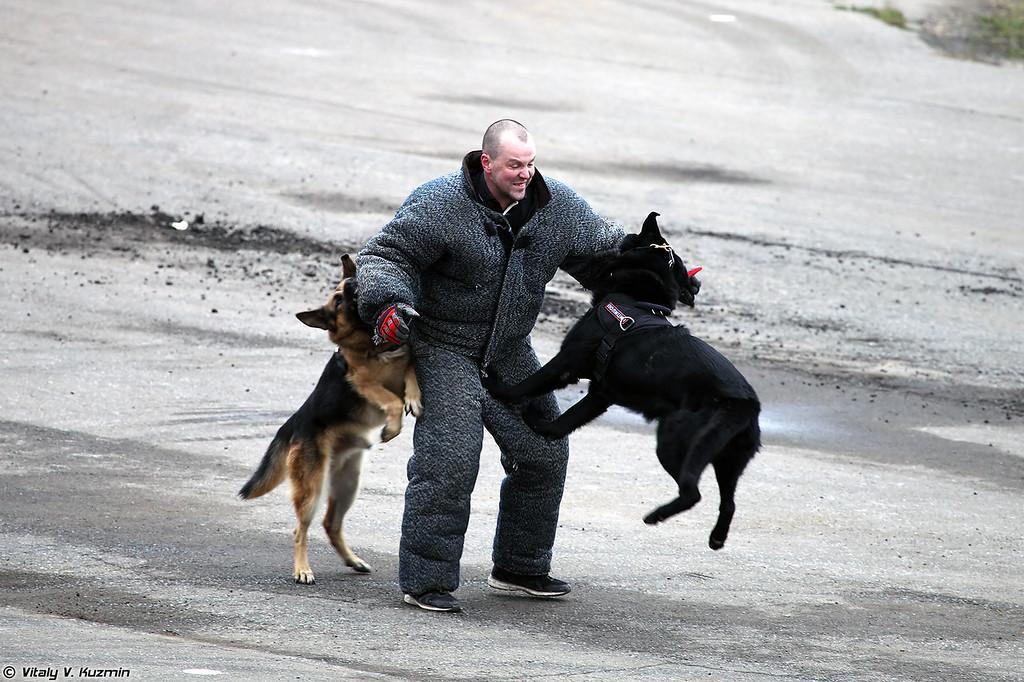 Выступление кинологов ГУ МВД России по г.Москве (Moscow police K-9 unit demonstration)