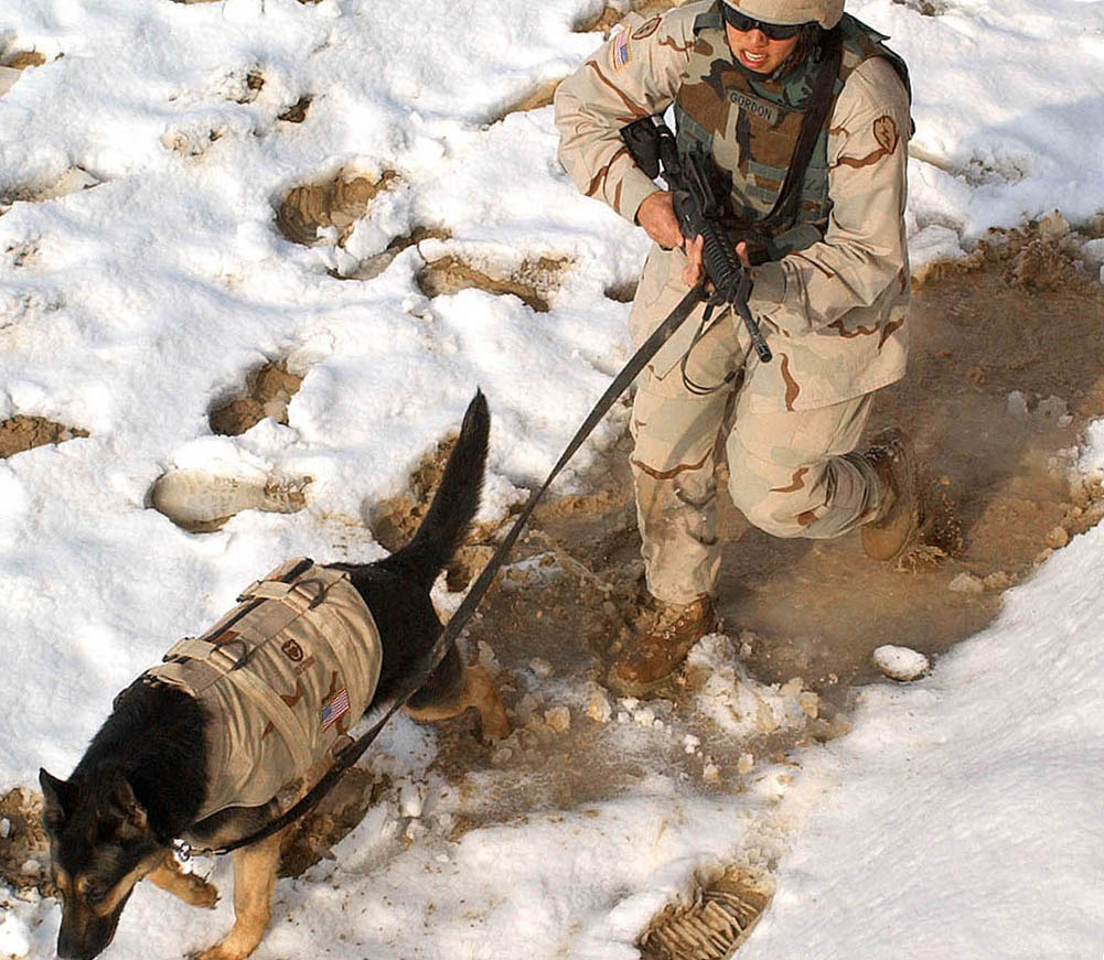 Sgt. 1st Class Erika Gordon, 58th Military Police Company, Afghanistan, trains with her dog.