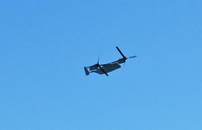 Osprey in Horizontal Flight