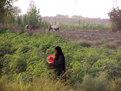 There might have been a bomb squad working a few yards away.  But this woman had crops to tend.