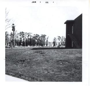 El Toro 1966 trees