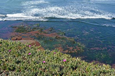 Low Tide Algae Blooms