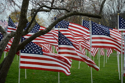 The Healing Field - Flags - Naperville, Illinois - November 6-12, 2015.