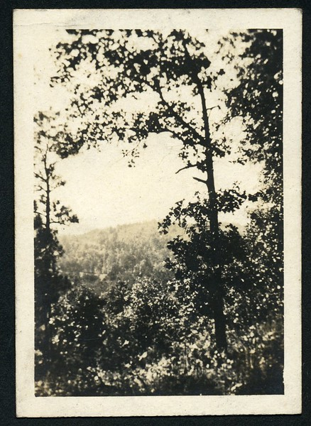 Lynchburg Home Guard Camp McClellan, Alabama Landscape IV (06288)