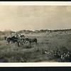 Lynchburg Home Guard Horses/Camp (06247)
