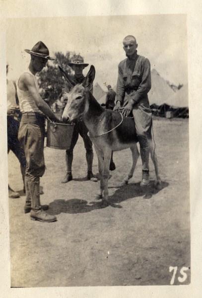 Feeding the Donkey (03434)