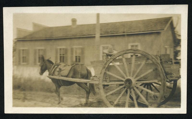 Mule & Wagon (06264)