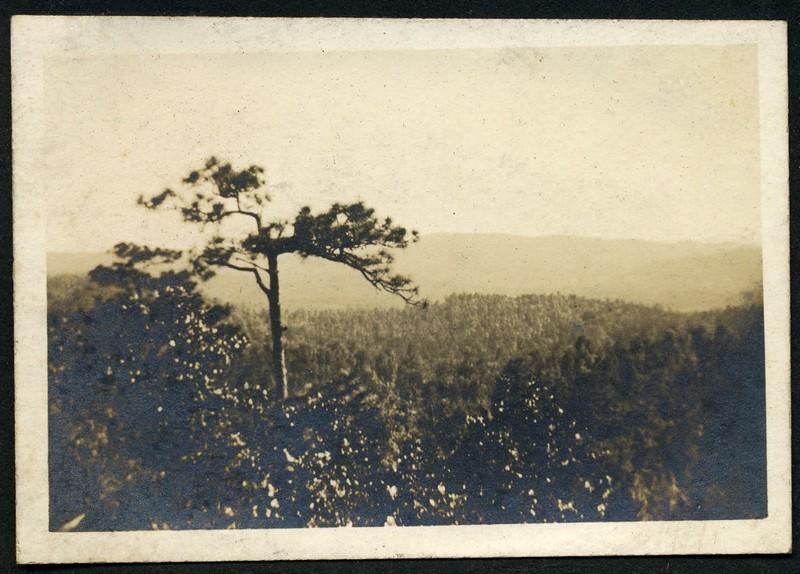 Lynchburg Home Guard Camp McClellan, Alabama  Landscape V (06289)
