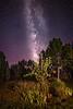 Milky Way in the Garden