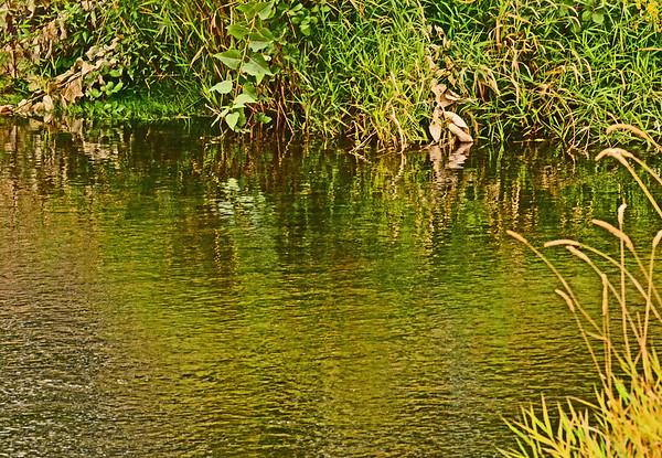 Mill Creek Scene, Heron, Pea, 9-7-16