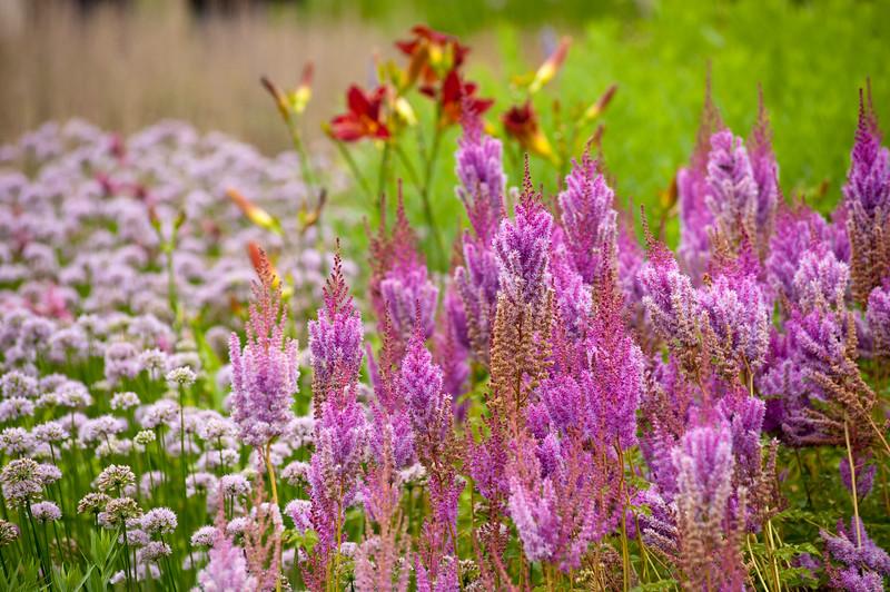 Flowers bloom in Millennium Park Lurie Garden